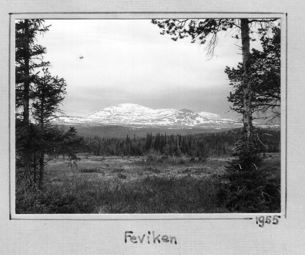 S.13 Feviken 1955