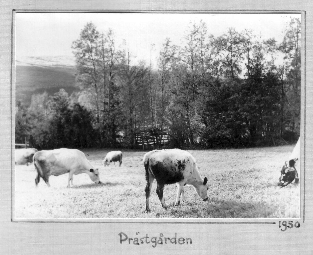 S.16 Prästgården 1950