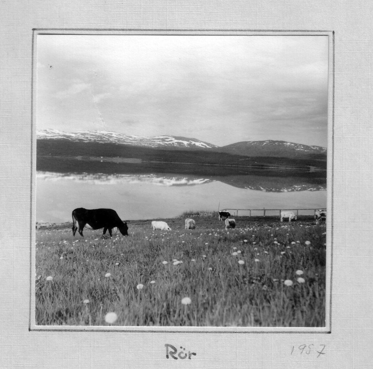 S.16 Rör 1957