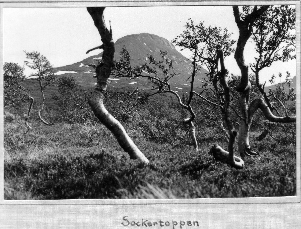 S.39 Sockertoppen