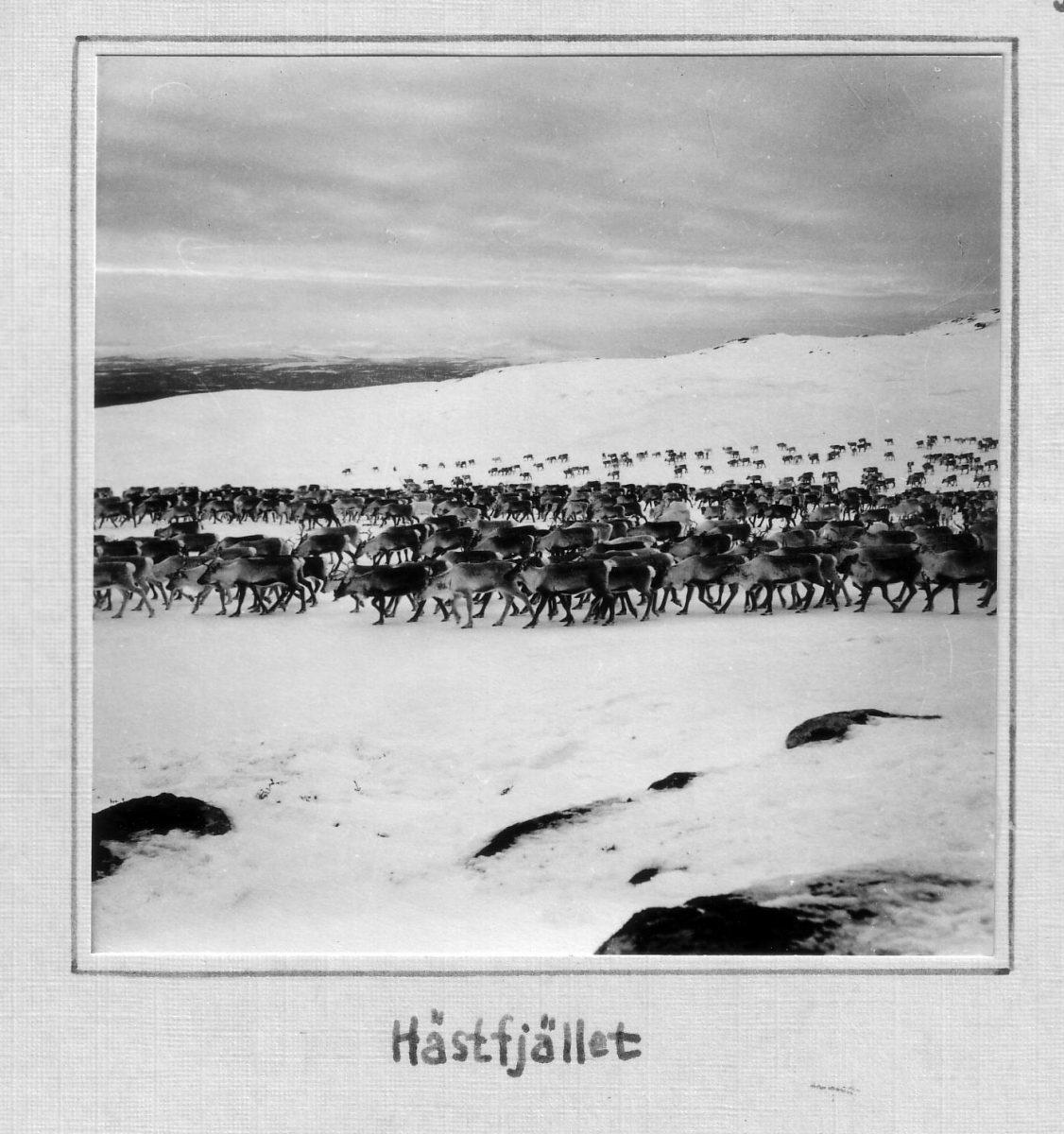 S.40 Hästfjället Bild 1