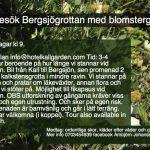 Besök Bergsjögrottan med blomsterguide