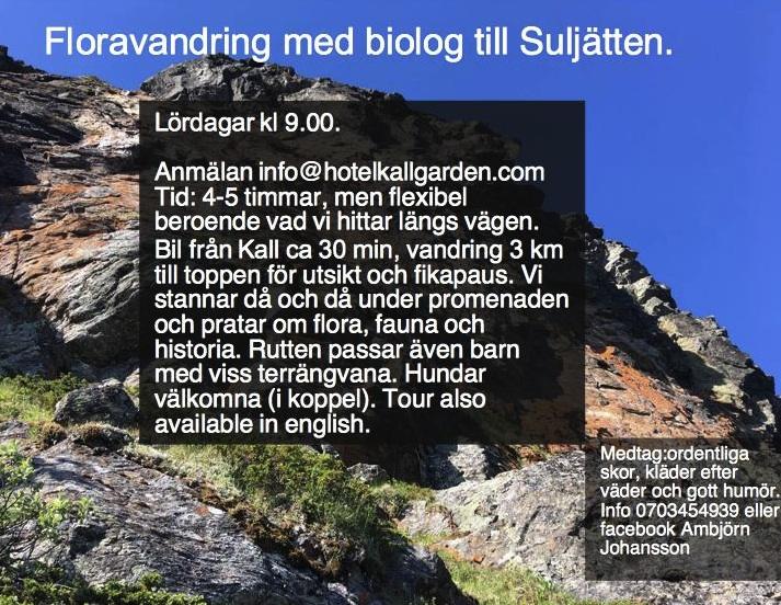 Floravandring med biolog till Suljätten
